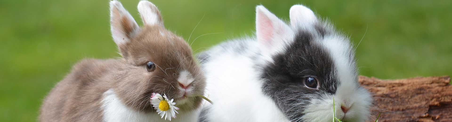 Andere dieren - konijn
